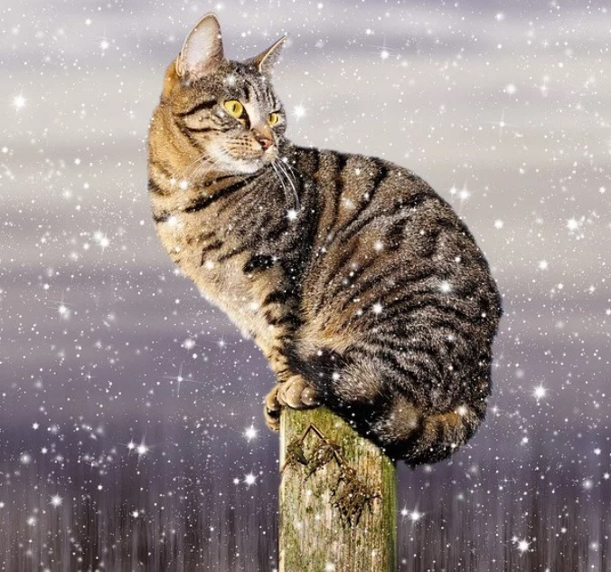chat froid hiver
