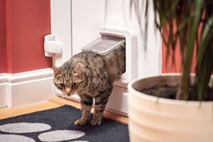 chatiere_porte_chat_chats_chaton_sureflap_amazon