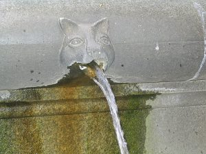 chat_qui_vomit_fontaine_jaimetropchat