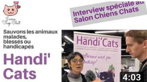 association protection chat féline handi'cats jaimetropchat J'aime Trop Chat