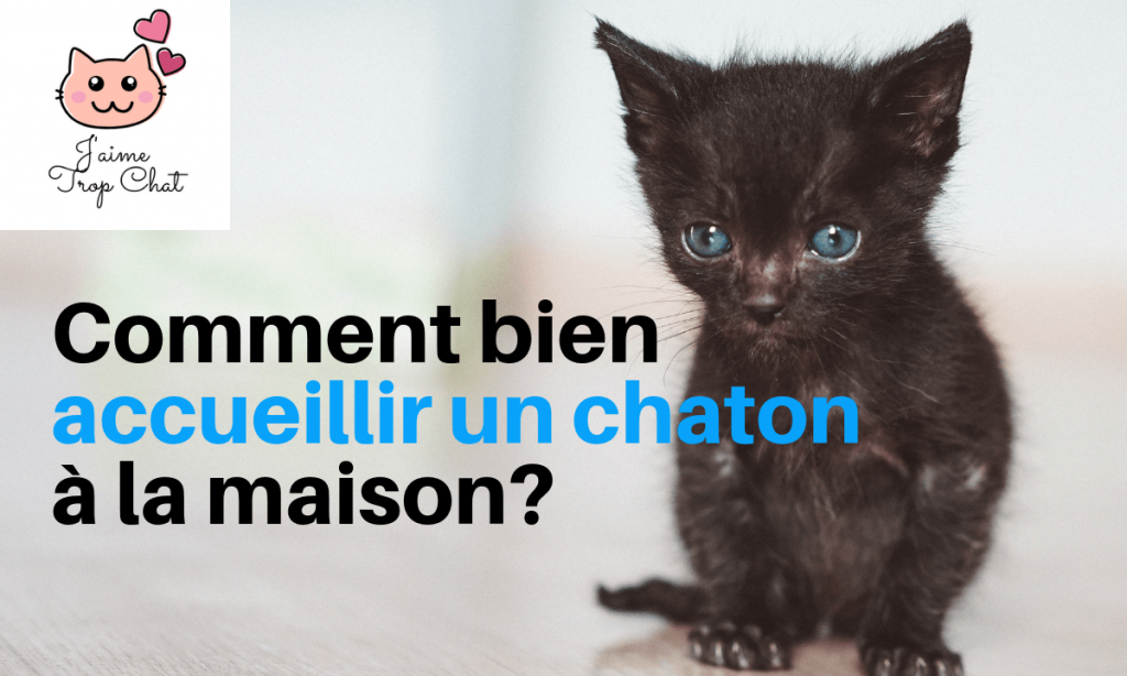 thumbnail_video_conseil_accueil_chaton_youtube_jaimetropchat_jaime_trop_chat