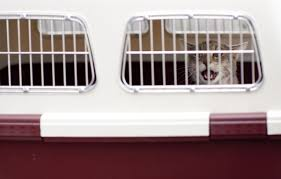 chat_cage_transport_jaimetropchat_jaime_trop_chat