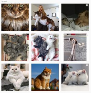 photo-chat-instagram-tag-chaton
