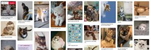 photo-chat-pinterest