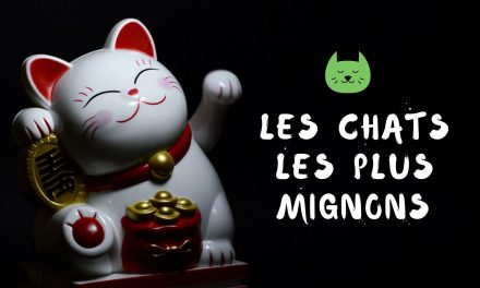 Photos de chats | Mignons – Rigolos – Droles | Bébés Chat – Chatons