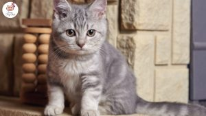 photo-chaton-mignon-gris