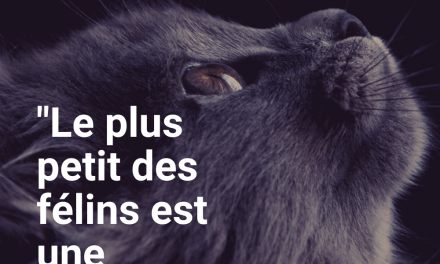 Citations | Les plus belles citations sur le chat
